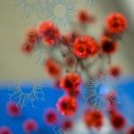 Journeys - Flowers