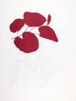Buds and simple flowers, drawing and screen print on Bockingford paper, 35x47 cm, Edition 10.